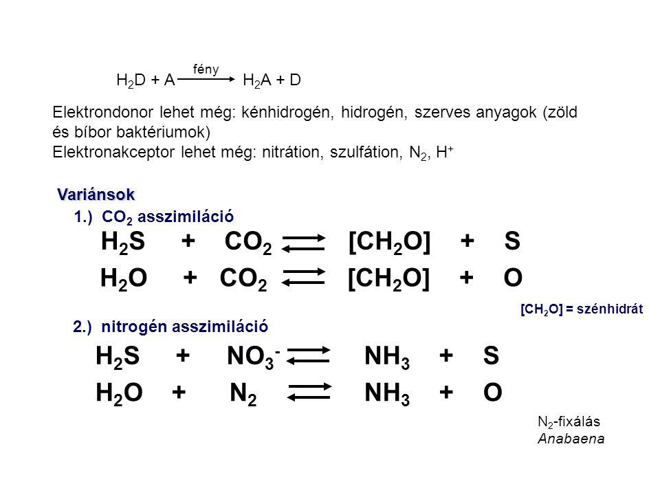 H2S + CO2 [CH2O] + S H2O + CO2 [CH2O] + O H2S + NO3- NH3 + S